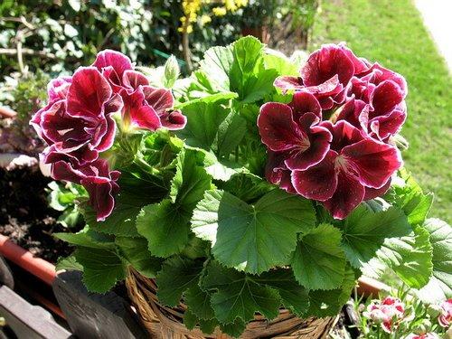 Къде в България има най-хубавите цветя?
